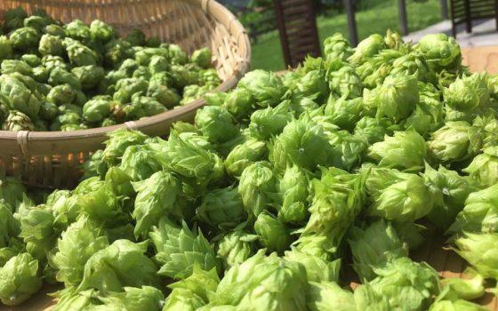 fujiyama_hunters_beer_hop2